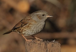 Птичьи путешествия по Карпатам